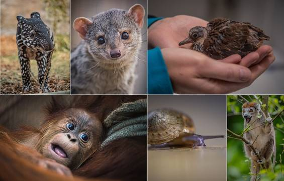 Chester zoo home to record number of 35 thousand animals