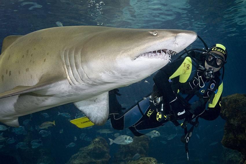 Blue Planet Aquarium Chester Shark Dive