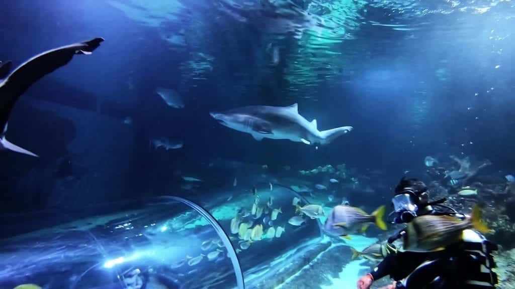 Blue Planet Aquarium Chester Swim With Sharks Scaled.jpg