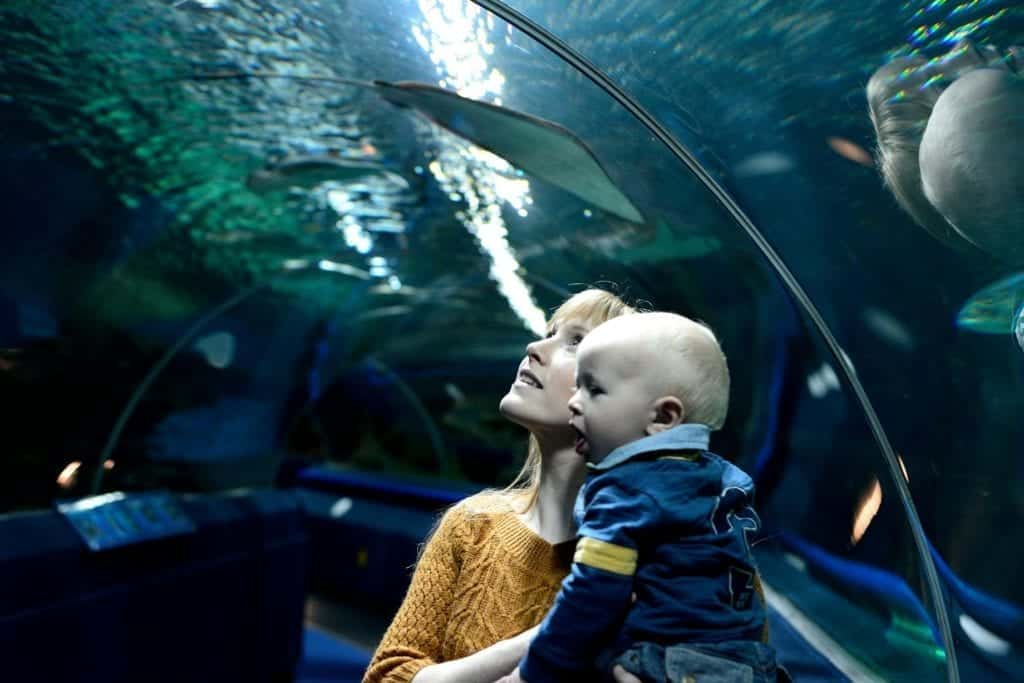 Blue Planet Aquarium Chester Things To Do Chester Scaled.jpg