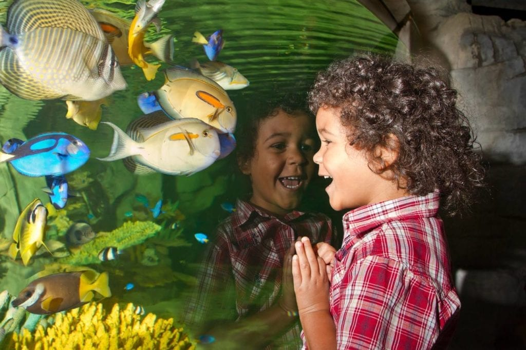 Blue Planet Aquarium Chester Things To Do With The Family Chester Scaled.jpg