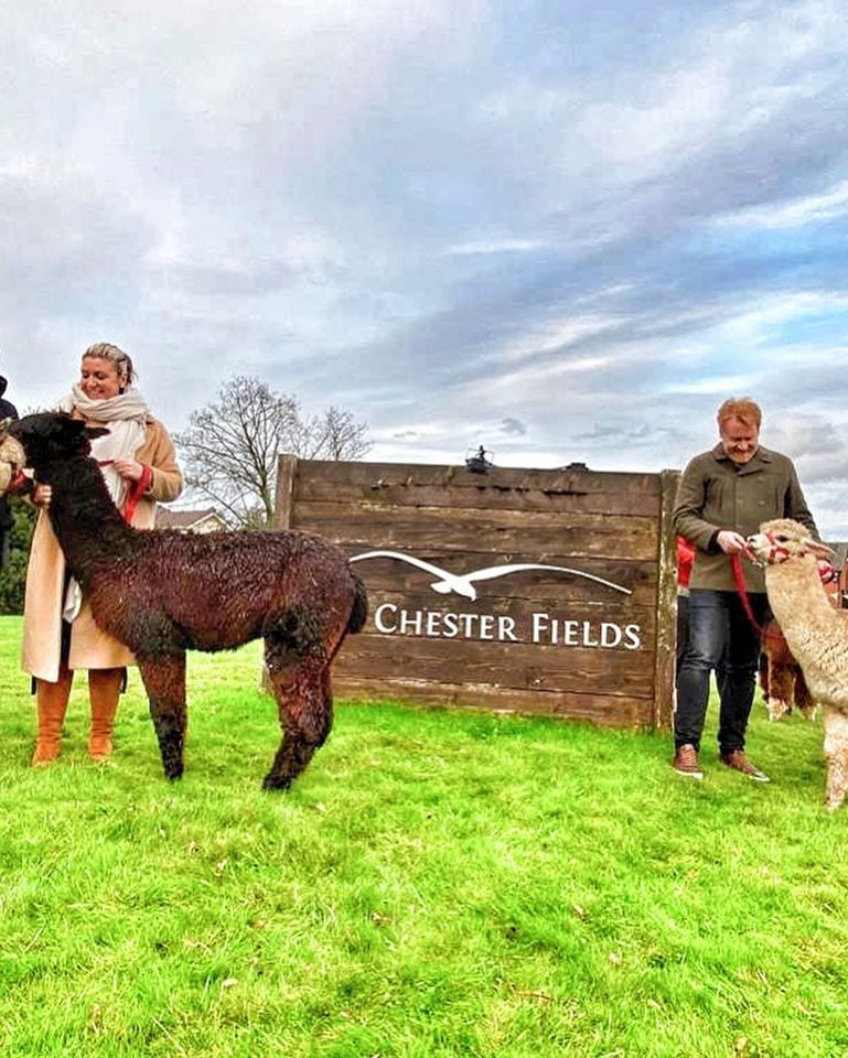 The Chester Fields Country Pub And Restaurant Alpaca Walks