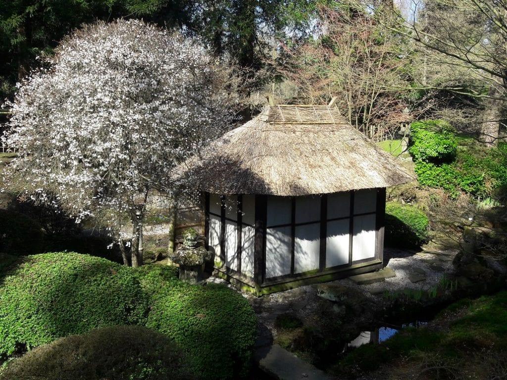 Tatton Park Early Spring In Japanese Garden