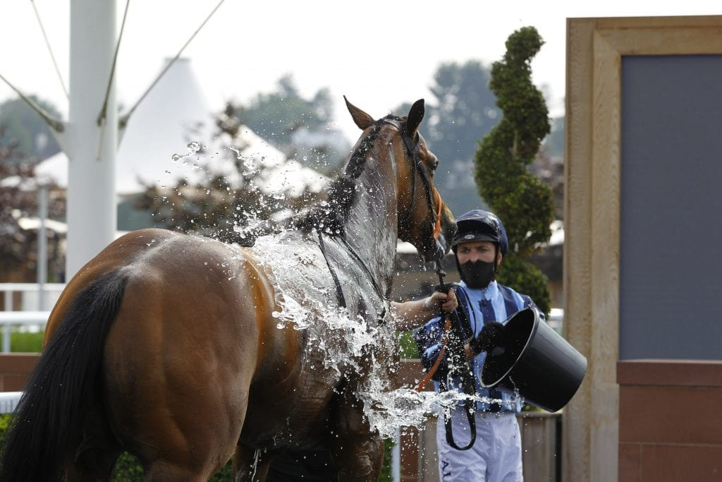 Kevin Stott Gives His Winner Militia A Wash Down After Victory At Chester