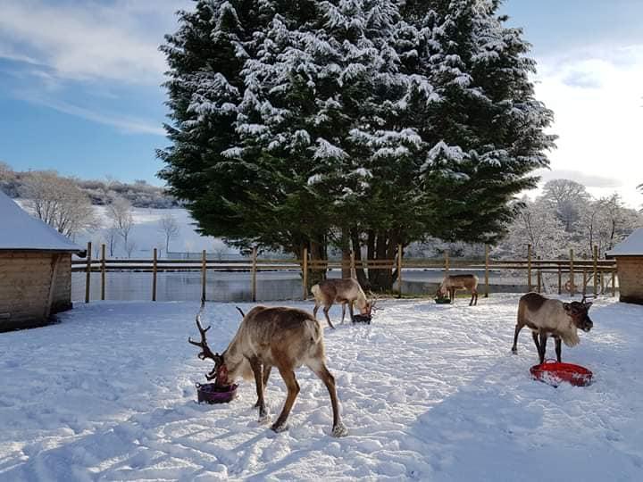 Reindeer Lodge Reindeer Paddock