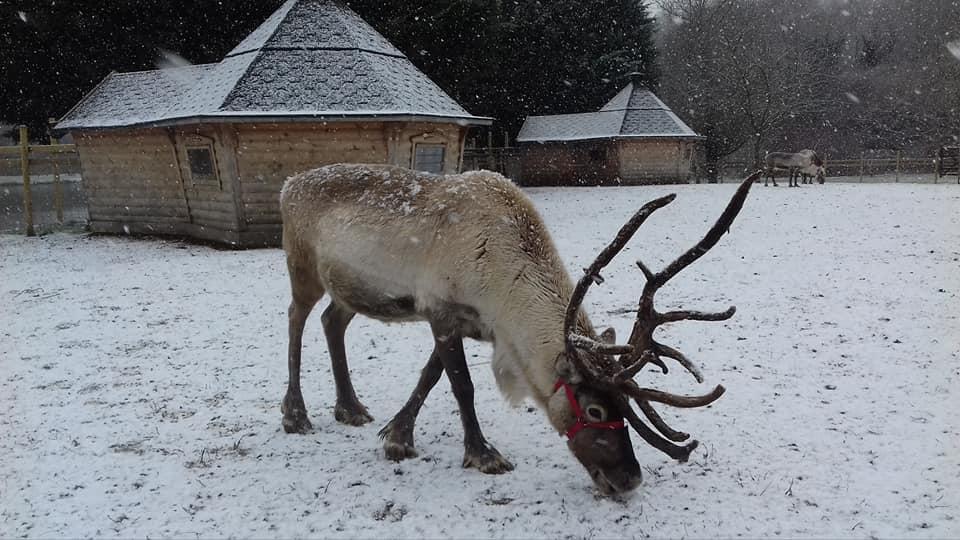 Reindeer Lodge Visit Reindeer