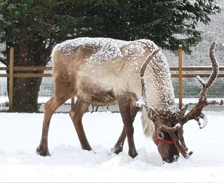 Reindeer Lodge Visit Santa Grotto