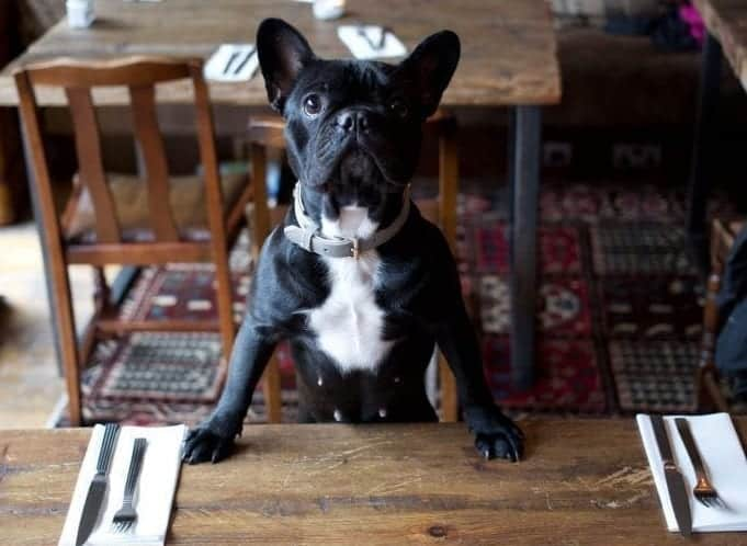 Commonhall Bar Restaurant Dogfriendly Chester.com