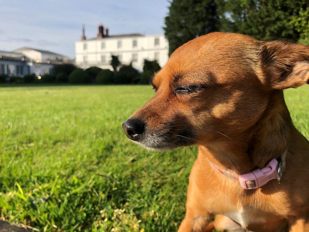 rowton hall hotel spa chester dog friendly